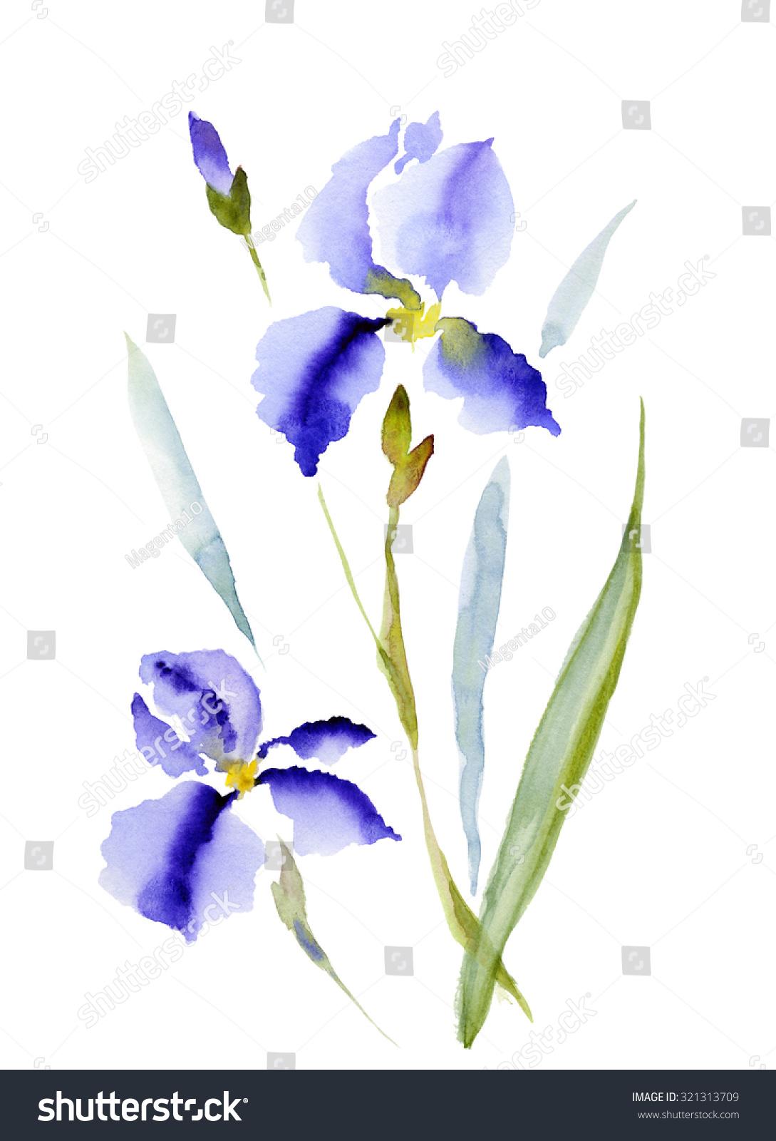 菖蒲,鸢尾,手绘水彩花白色隔离,栅格图-艺术,自然-()