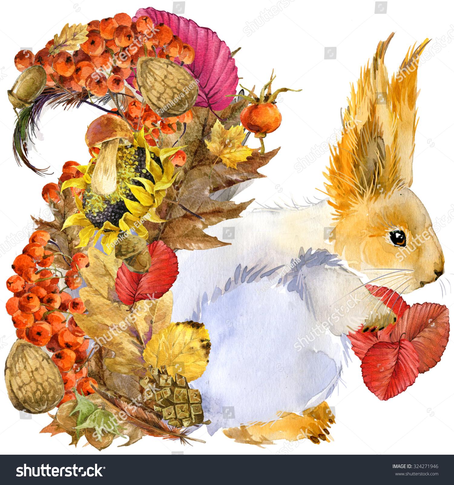 森林动物松鼠,秋天大自然丰富多彩的叶子背景,水果,浆果,蘑菇,黄色的