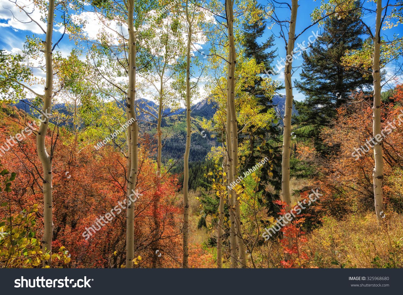 秋天的颜色在华沙契国家森林在犹他州-自然,公园/户外图片
