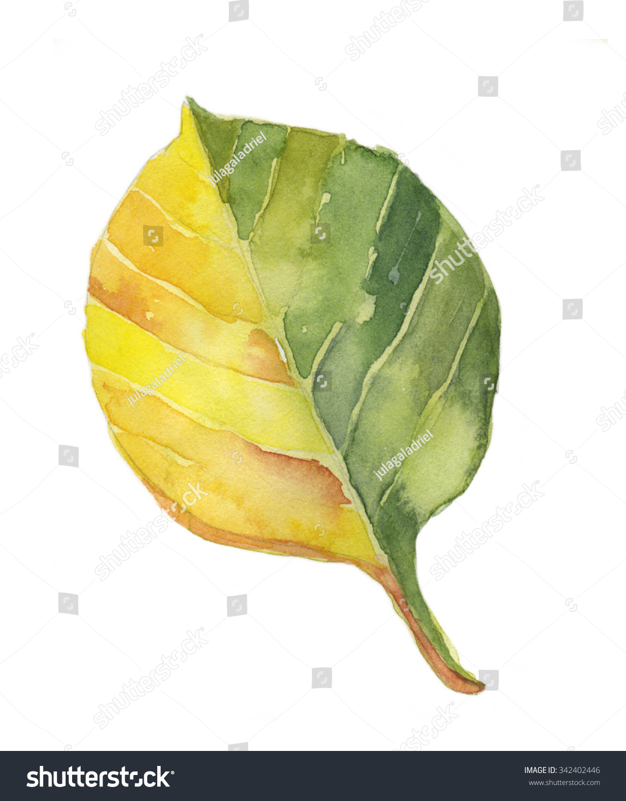 手画水彩黄色的叶子-艺术-海洛创意(hellorf)-中国-.图片