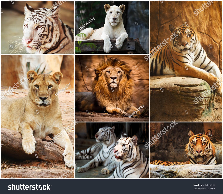 白色的拼贴在动物园里-动物/野生
