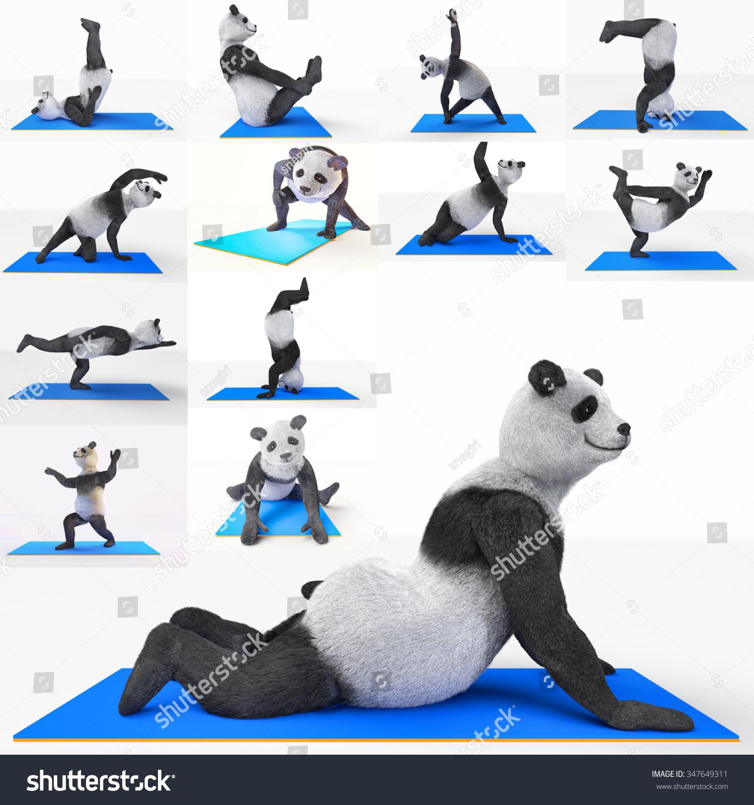 动物熊猫运动员运动员做瑜伽伸展运动
