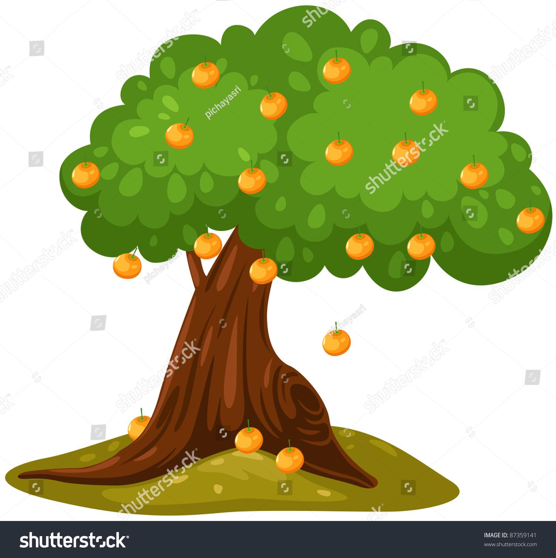 孤立的橘子树在白色背景-自然