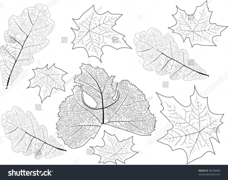 手工制作树叶明信片