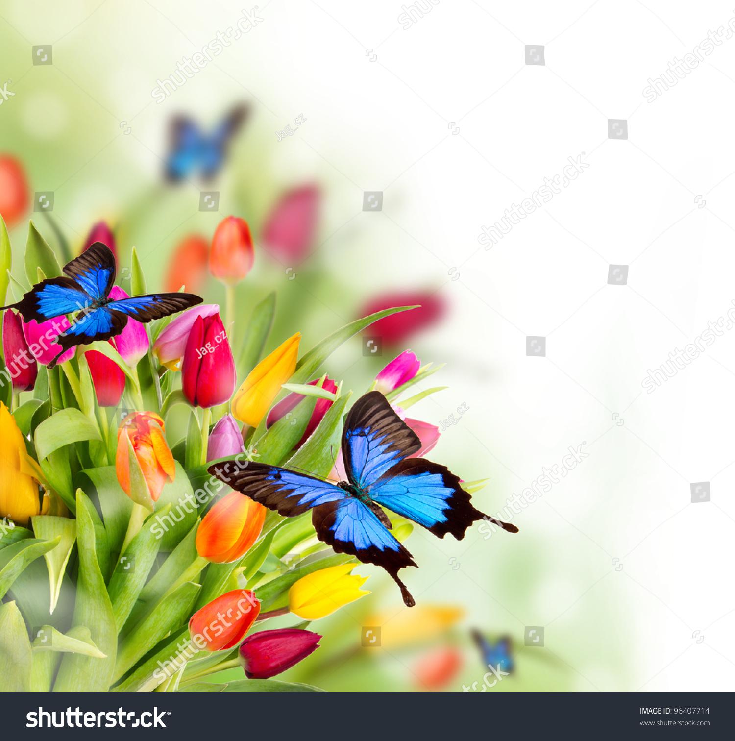 春天的花朵与异国情调的蝴蝶-动物/野生生物