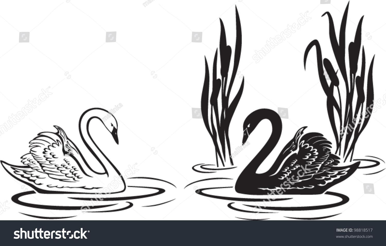 矢量图的白色和黑天鹅-动物/野生生物